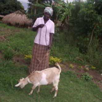 Actual Goat Gifts in Uganda